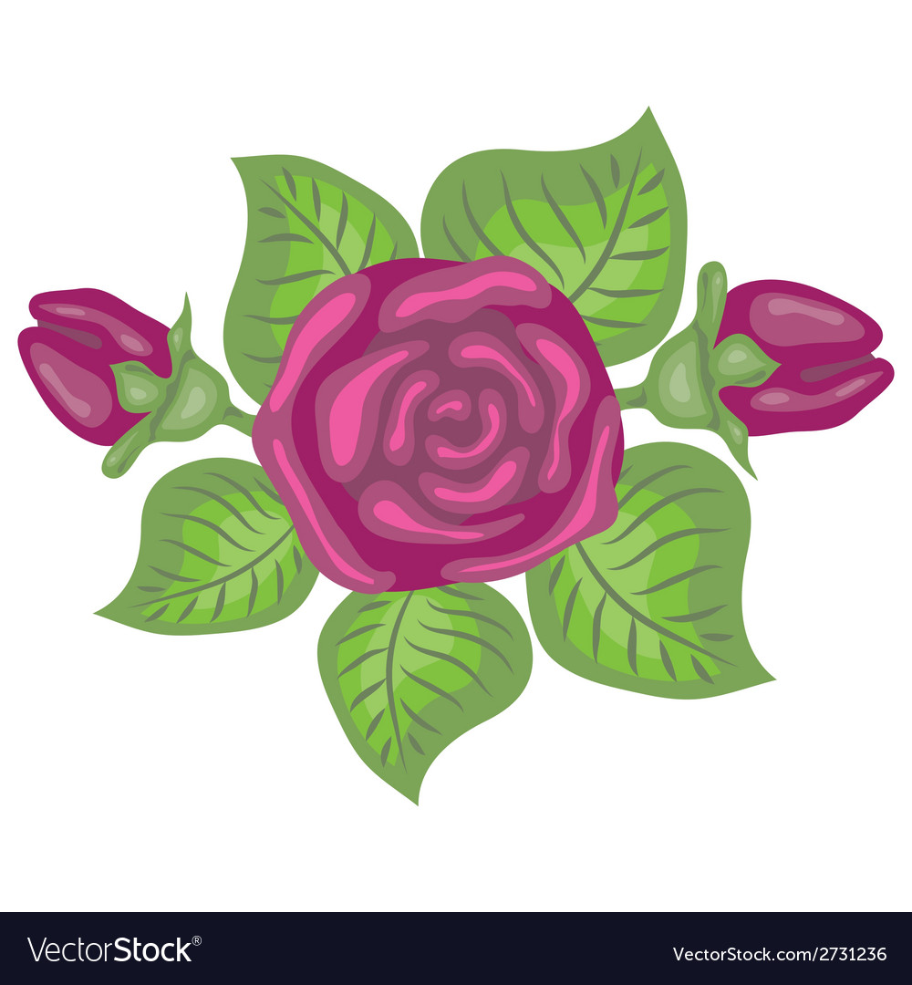 Beautiful of pink rose vector | Price: 1 Credit (USD $1)