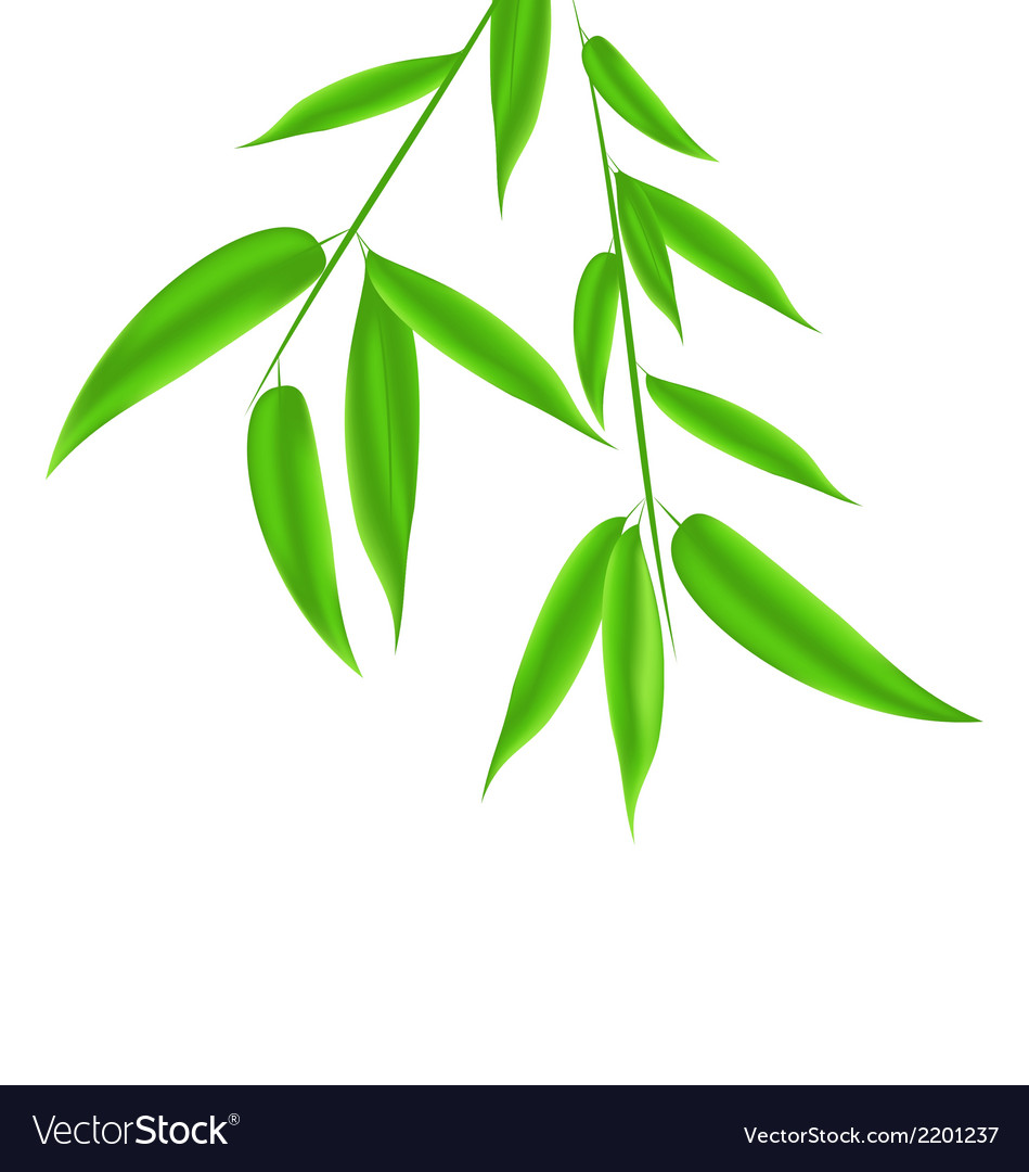 Bamboo leaves pattern with space for your text vector | Price: 1 Credit (USD $1)