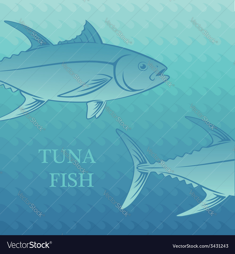 Fish tuna vector | Price: 1 Credit (USD $1)