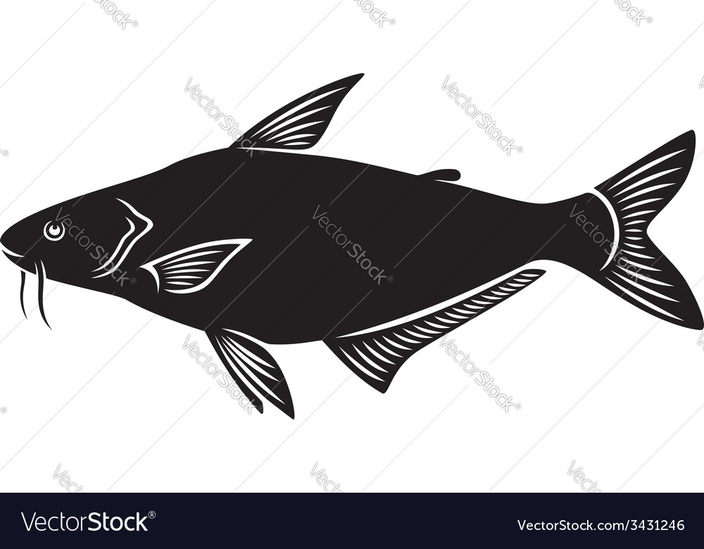 Pangasius vector | Price: 1 Credit (USD $1)
