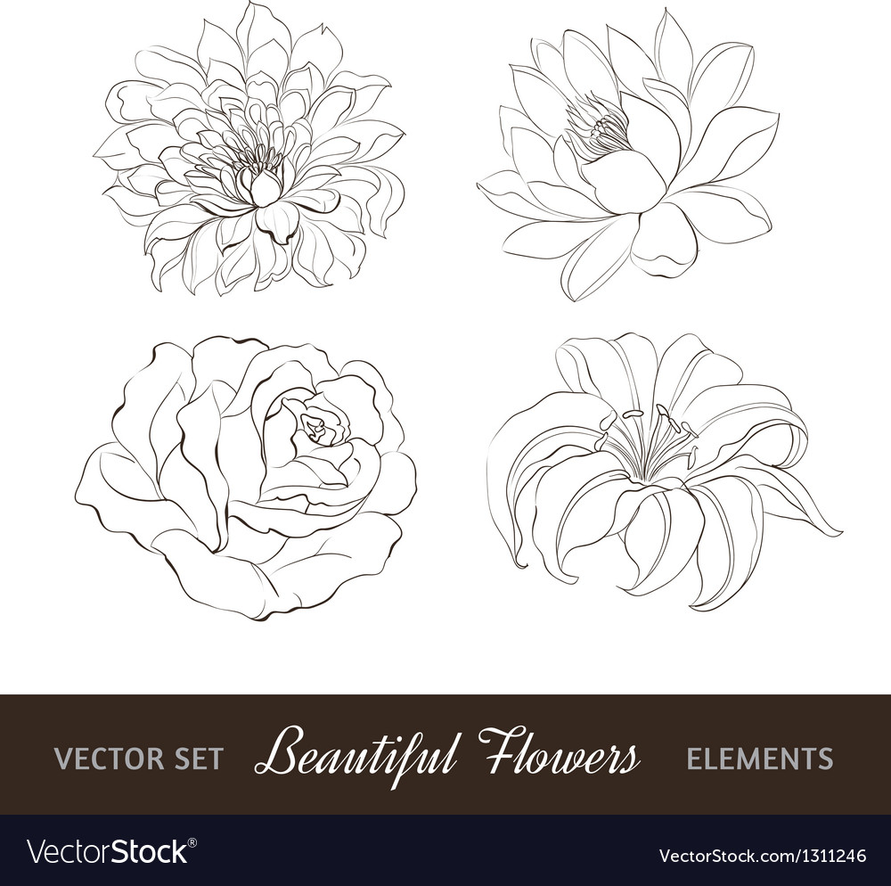 Set of flowers isolated over white vector | Price: 1 Credit (USD $1)