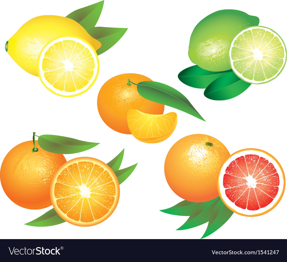 Citrus set vector | Price: 3 Credit (USD $3)