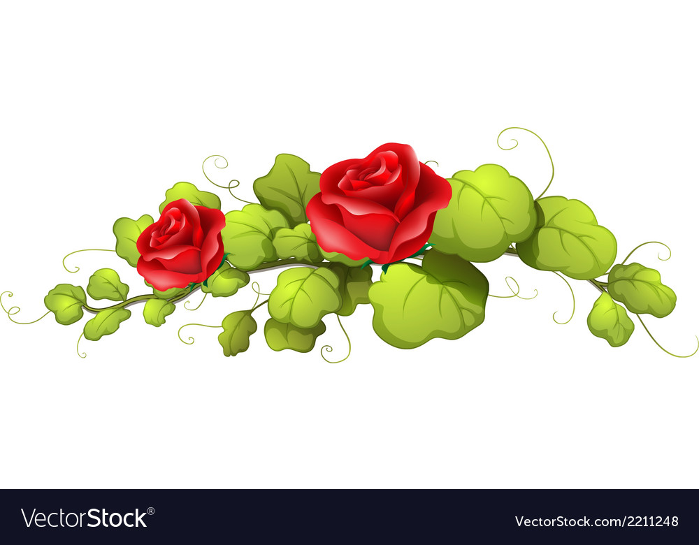 A rose flower vector | Price: 1 Credit (USD $1)