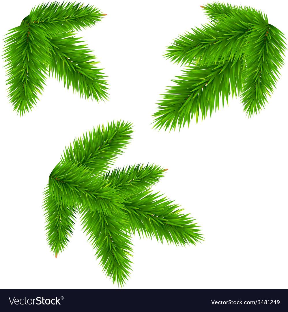 Fir tree branch vector | Price: 1 Credit (USD $1)