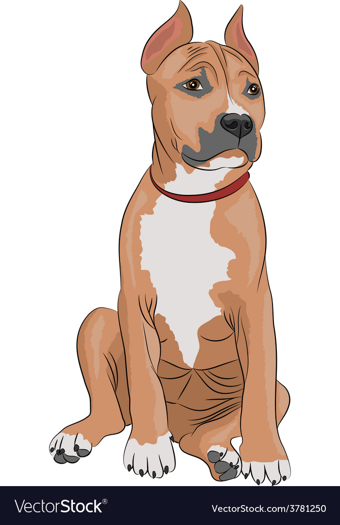 Staffordshire terrier a vector | Price: 1 Credit (USD $1)