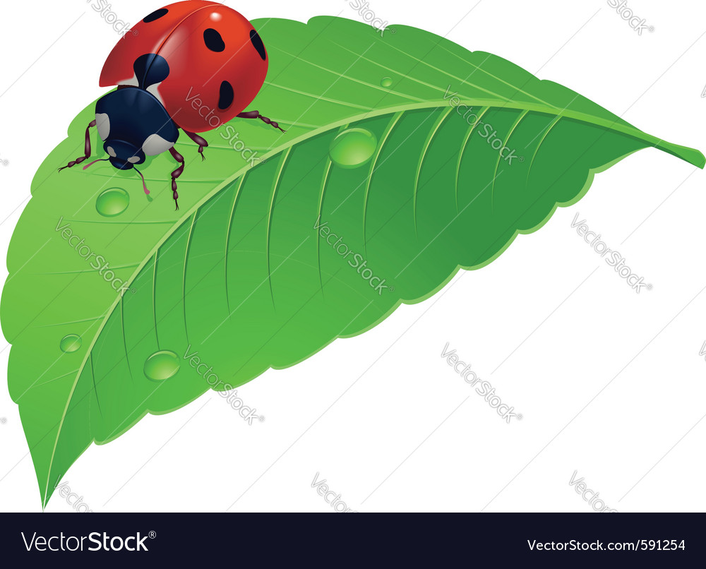 Ladybird on grass with water drops vector | Price: 1 Credit (USD $1)