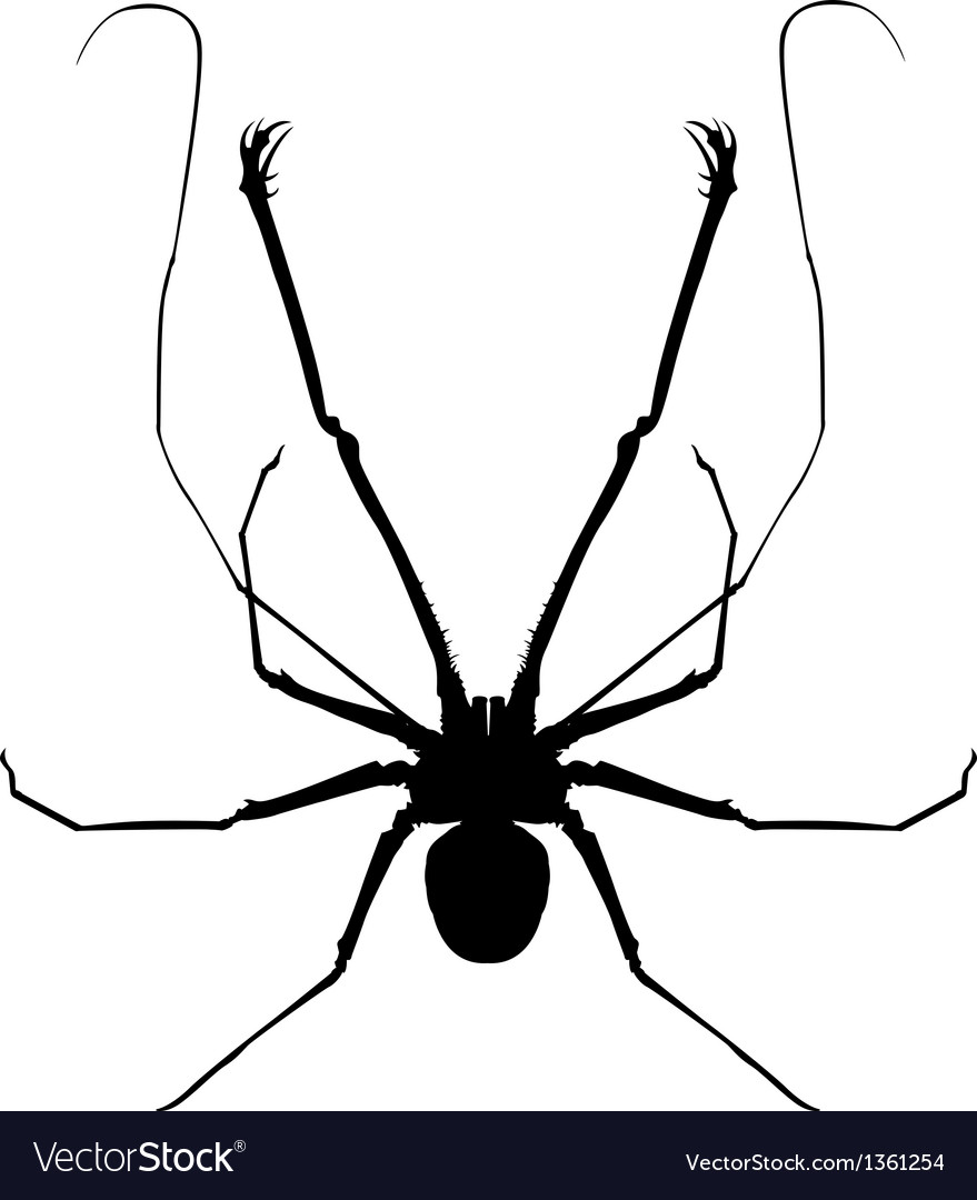 Whip spider vector | Price: 1 Credit (USD $1)