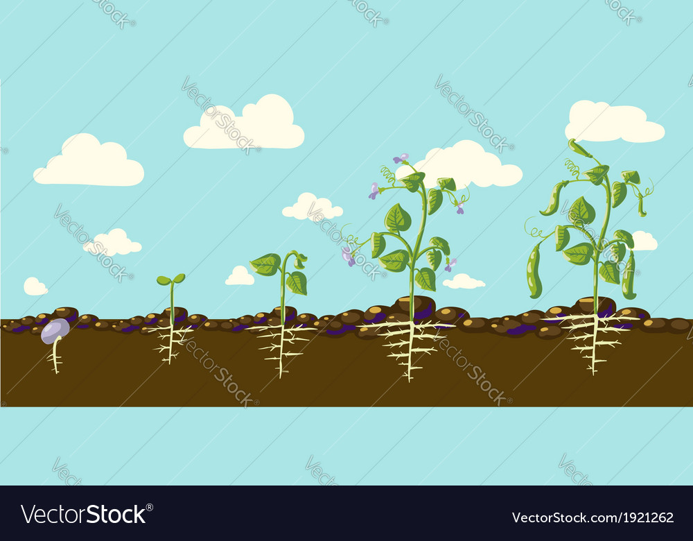 Beans vector   Price: 1 Credit (USD $1)