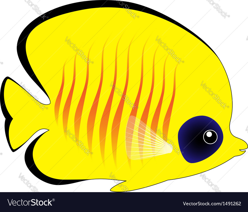 Butterfly fish isolated on white vector | Price: 1 Credit (USD $1)