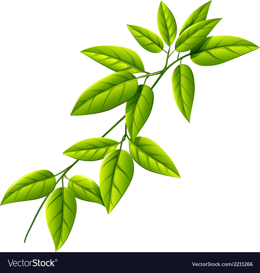 A leafy plant vector | Price: 1 Credit (USD $1)