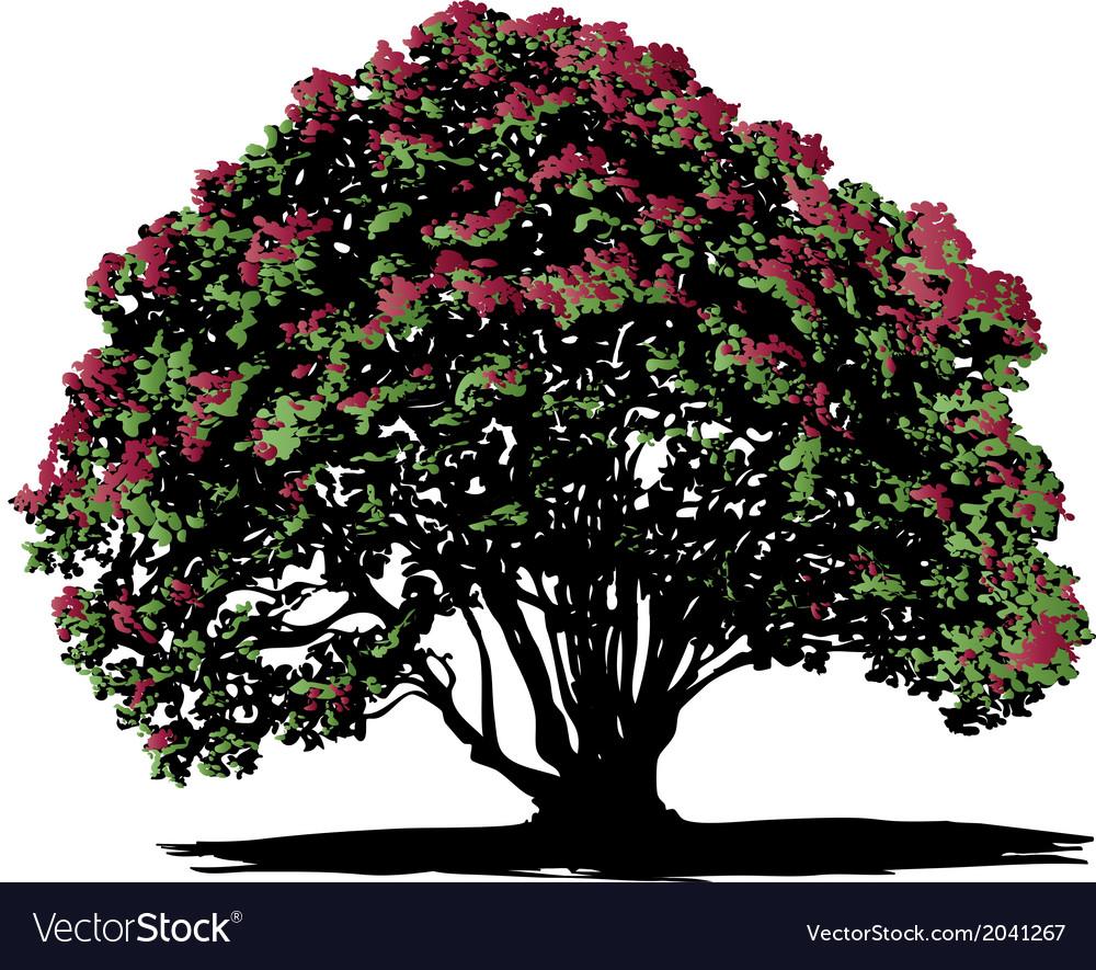 Pohutukawa tree vector | Price: 1 Credit (USD $1)