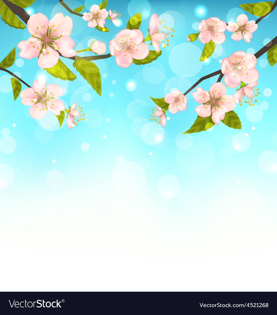 Cherry blossom branches of tree natural glowing vector | Price: 1 Credit (USD $1)