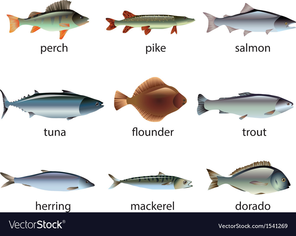 Fish set vector | Price: 3 Credit (USD $3)