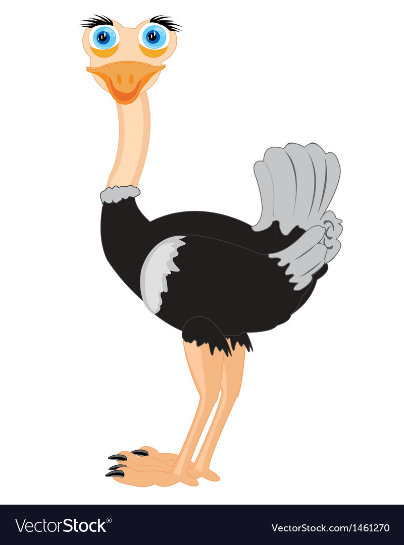 Drawing of the ostrich vector | Price: 1 Credit (USD $1)