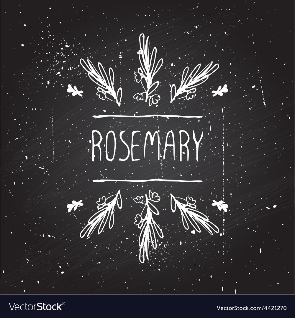 Herbs and spices collection  rosemary vector