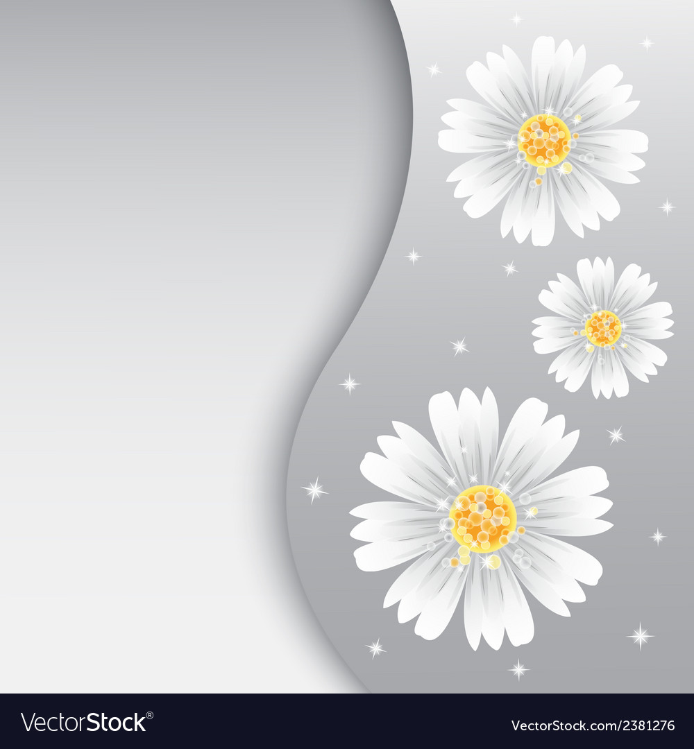Daisy flowers on the greeting card vector | Price: 1 Credit (USD $1)