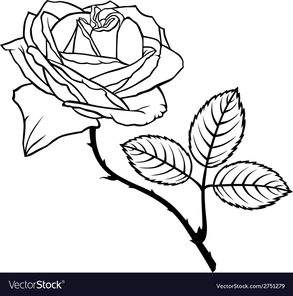 Rose beauty vector | Price: 1 Credit (USD $1)