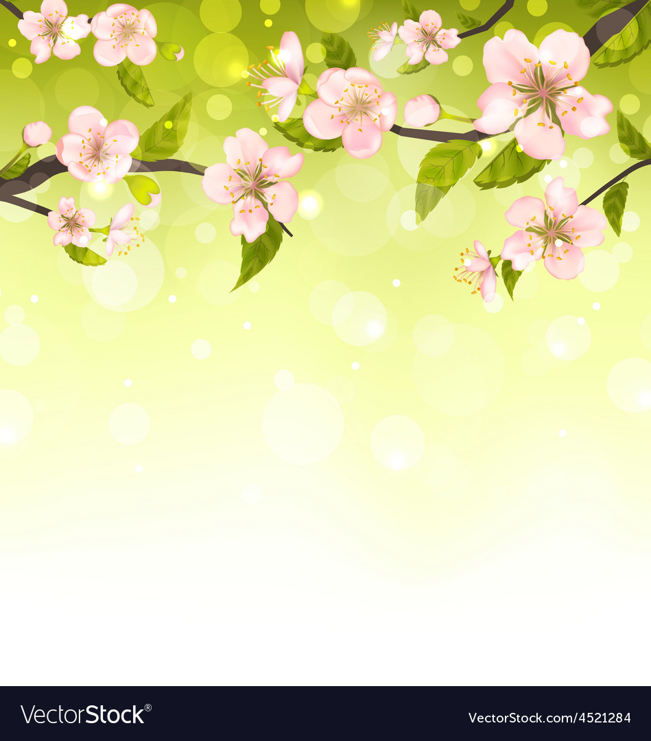 Cute branches of cherry blossom tree vector | Price: 1 Credit (USD $1)