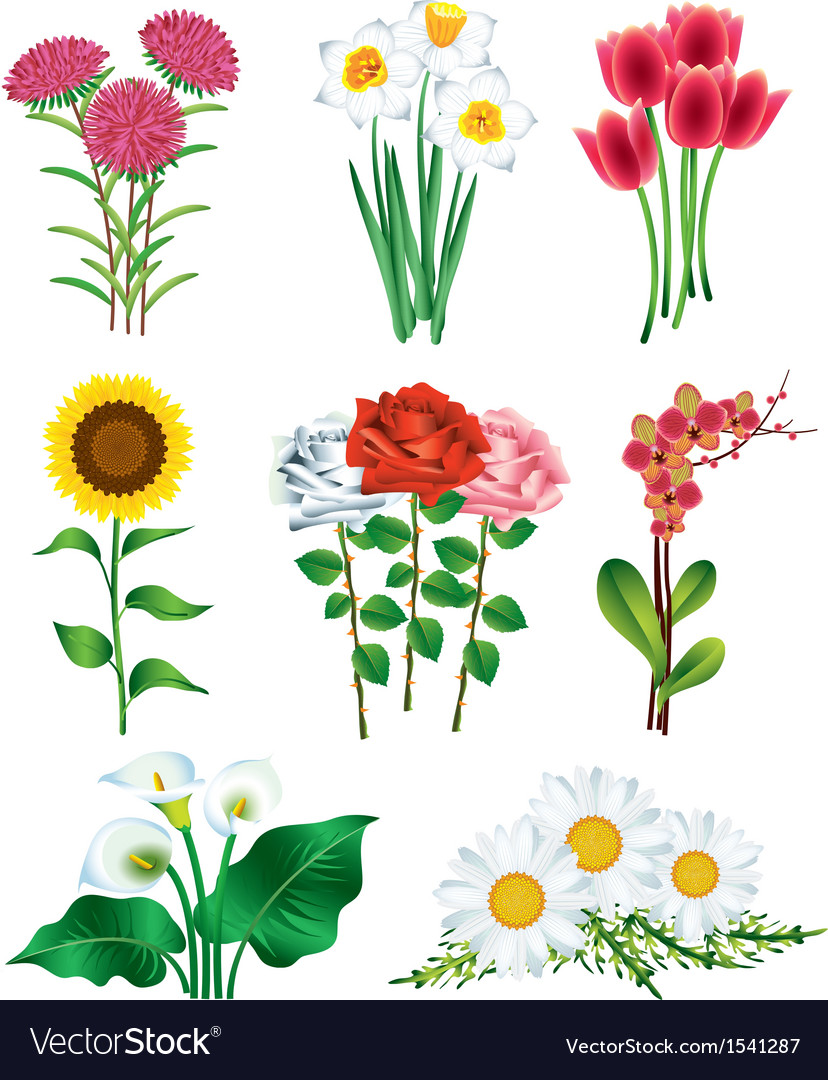 Flowers vector | Price: 3 Credit (USD $3)
