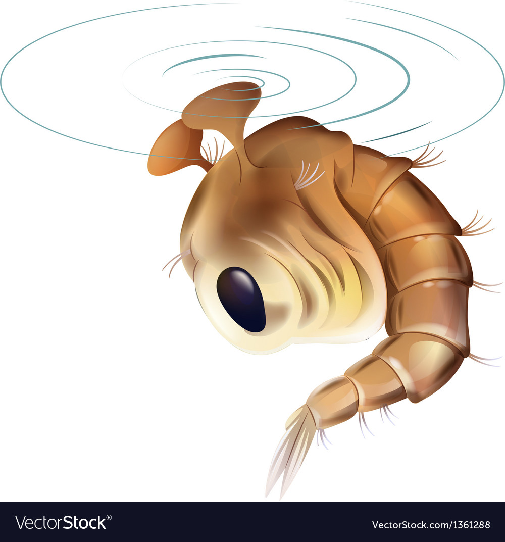 Mosquito pupae stage vector | Price: 1 Credit (USD $1)