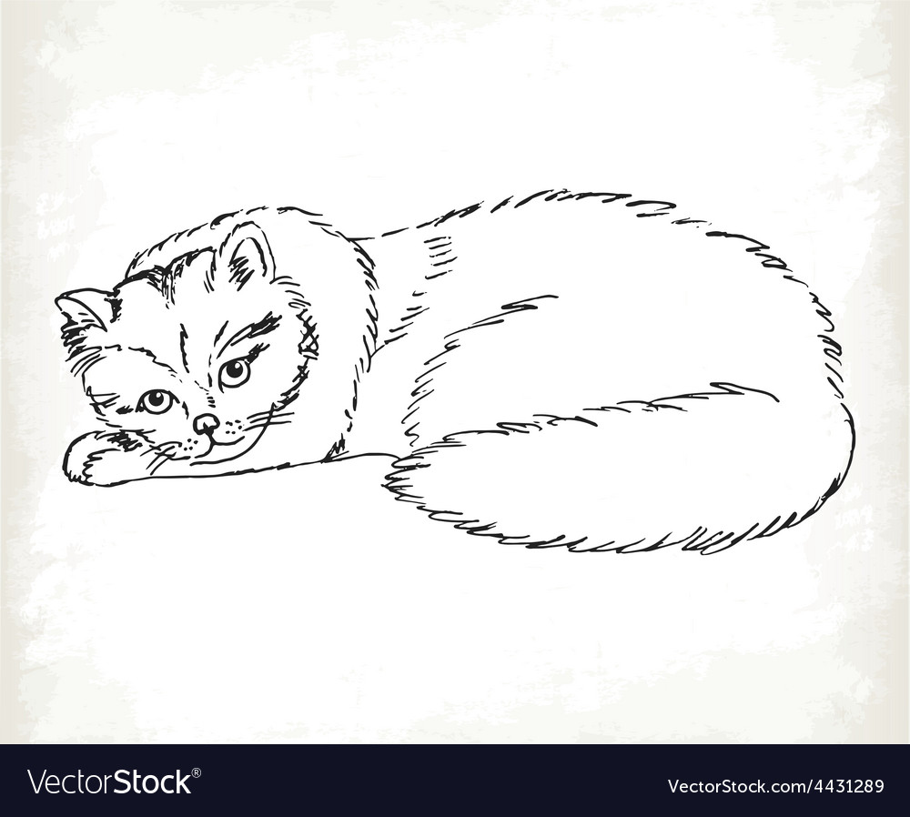 Fluffy cat in sketch style on a white background vector | Price: 1 Credit (USD $1)