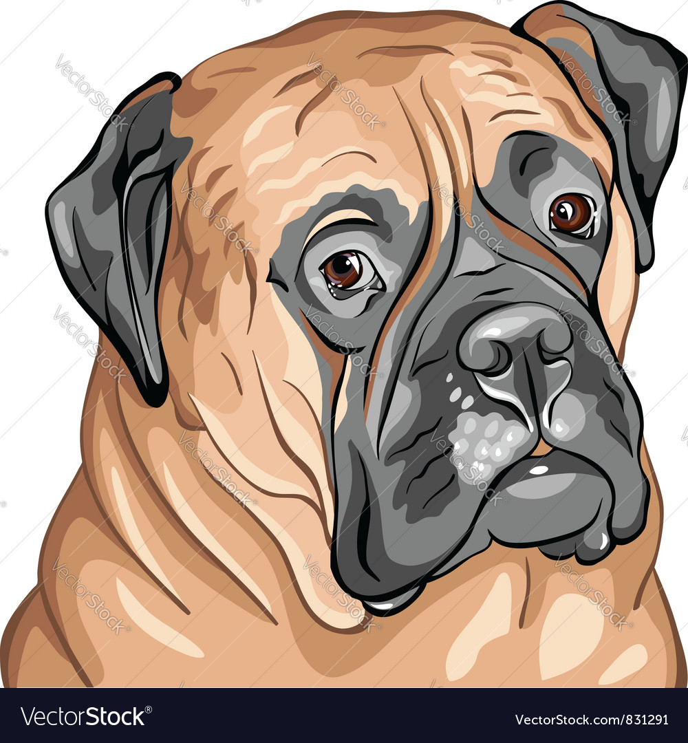 Bullmastiff vector | Price: 3 Credit (USD $3)