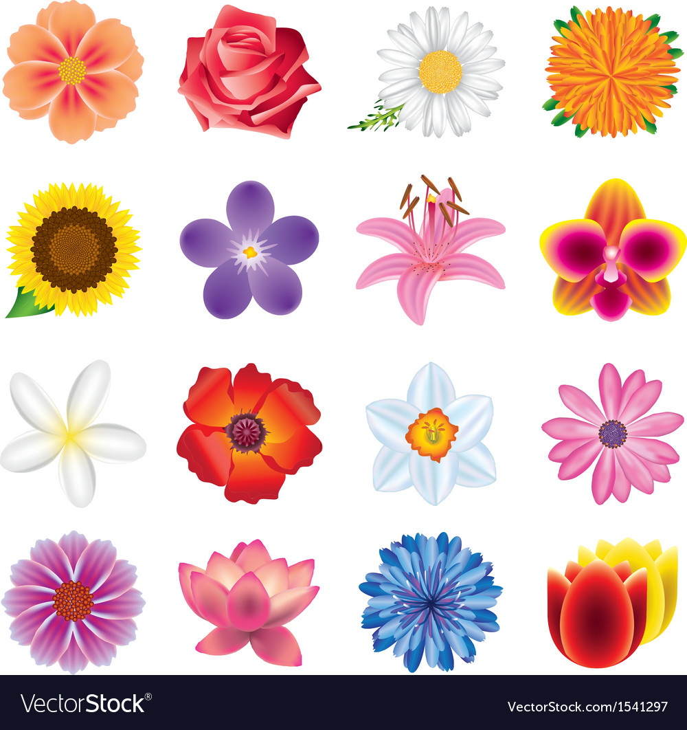 Flowers set vector | Price: 3 Credit (USD $3)