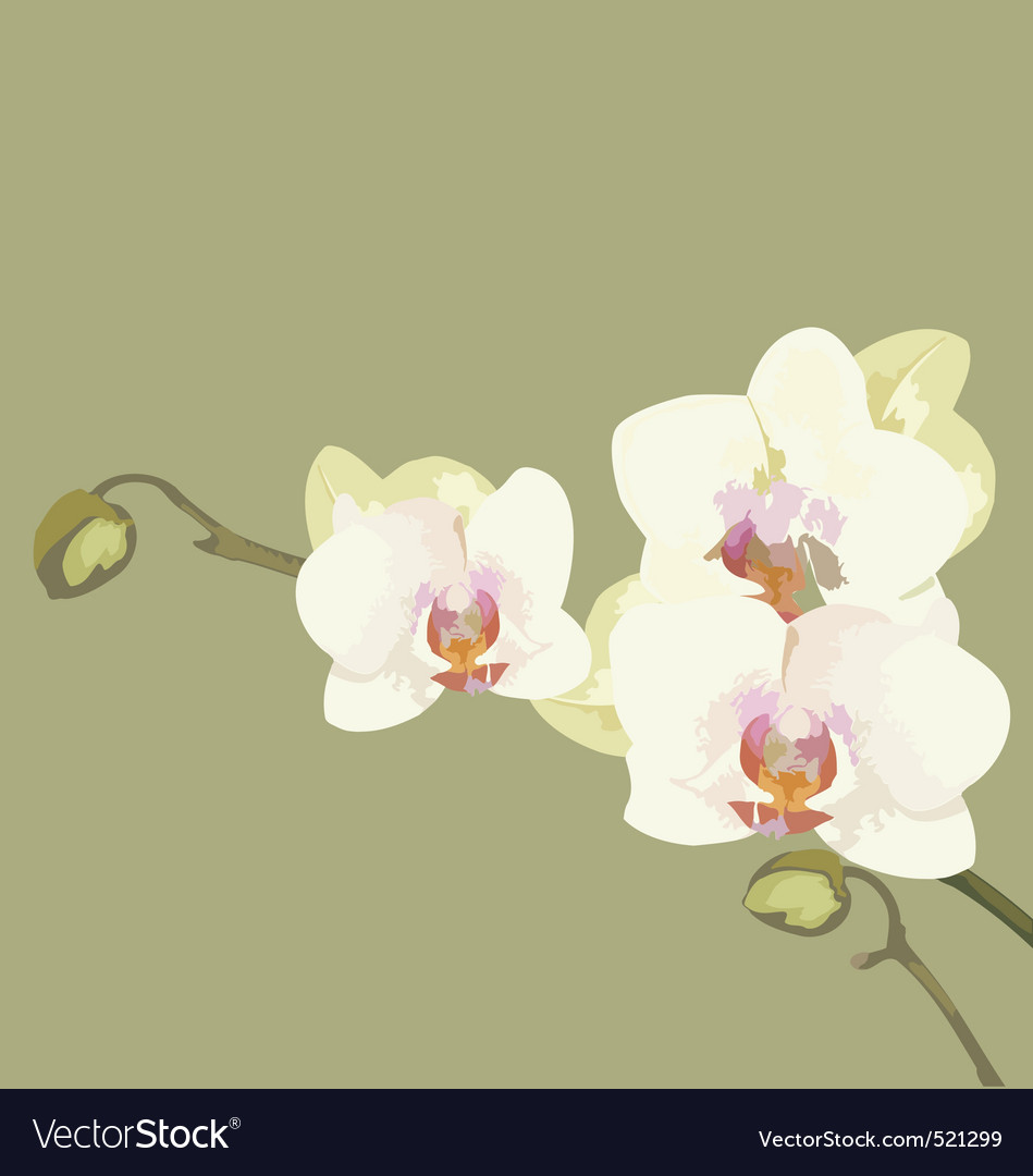 Orchid branch vector | Price: 1 Credit (USD $1)