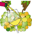 Grapes and white wine vector
