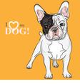 Domestic dog french bulldog breed vector