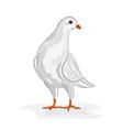 White dove white pigeon symbol peace vector