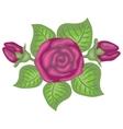 Beautiful of pink rose vector
