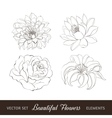 Set of flowers isolated over white vector