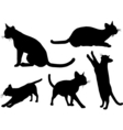 Cats design vector