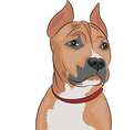 Staffordshire terrier a vector