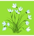 First spring flowers snowdrops vector