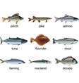 Fish set vector