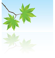 Branch with maple leaves vector