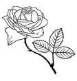 Rose beauty vector
