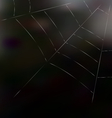 Trap spider web on dark background for design web vector