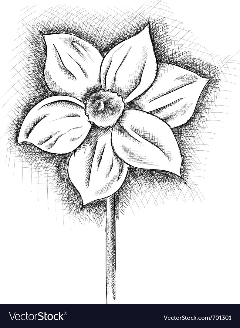 Daffodil isolated on the white vector | Price: 1 Credit (USD $1)