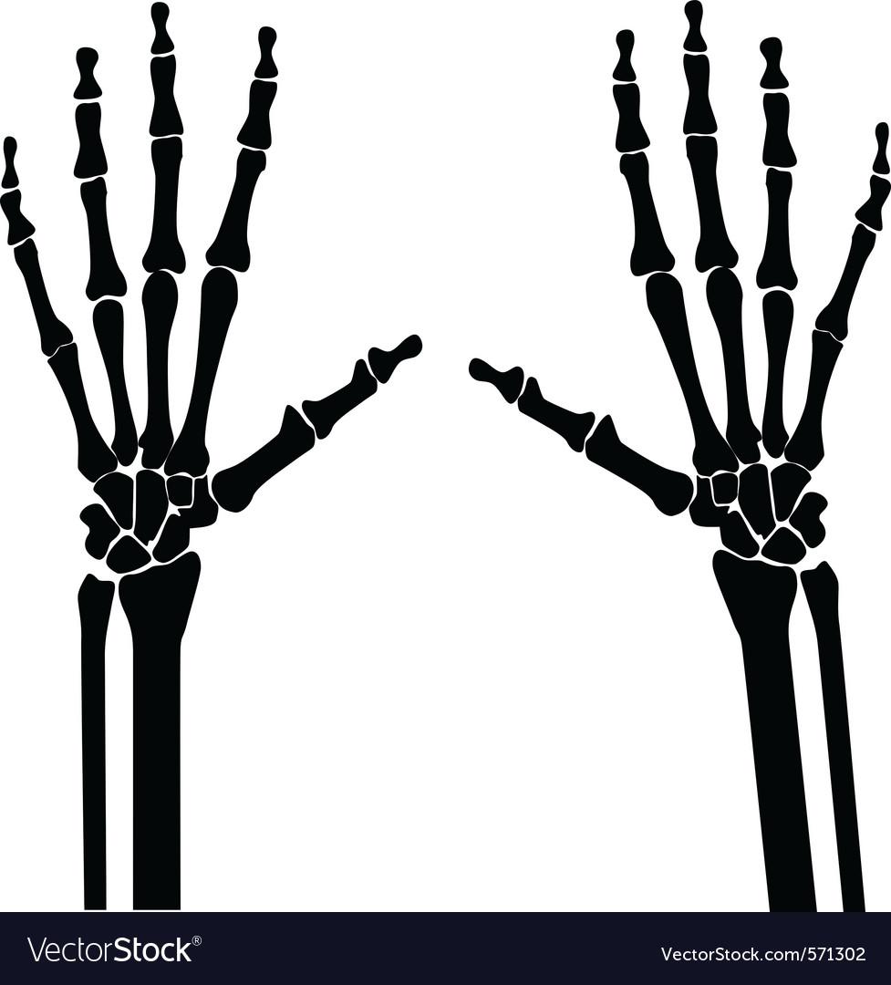 Xray hands vector | Price: 1 Credit (USD $1)