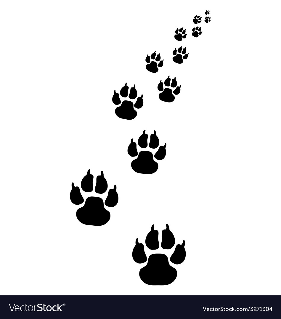 Footprints of dogs 3 vector | Price: 1 Credit (USD $1)