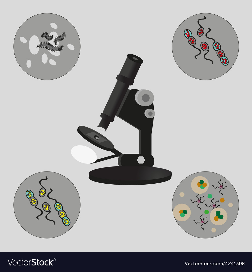 Microscope bacteria and viruses vector | Price: 1 Credit (USD $1)