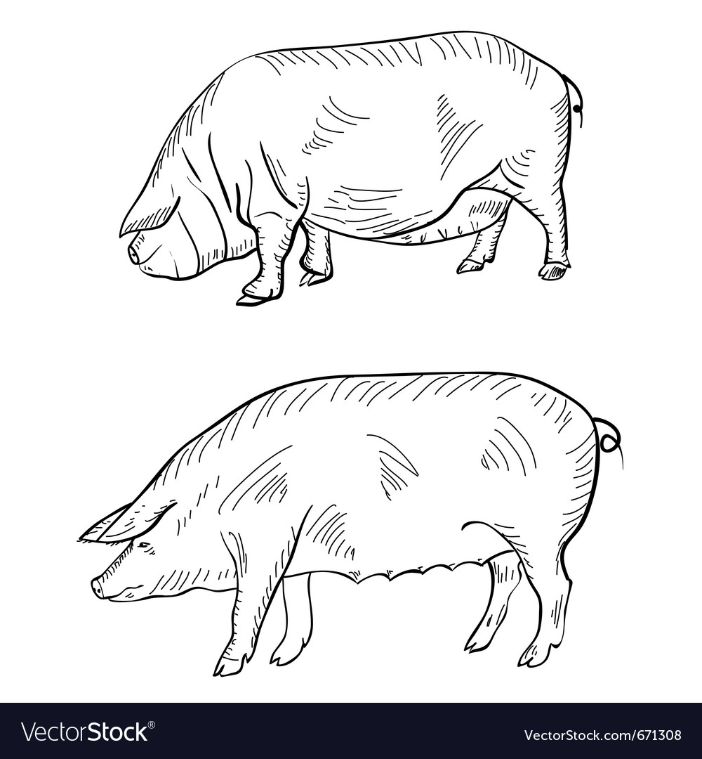 Pig pen drawing vector | Price: 1 Credit (USD $1)