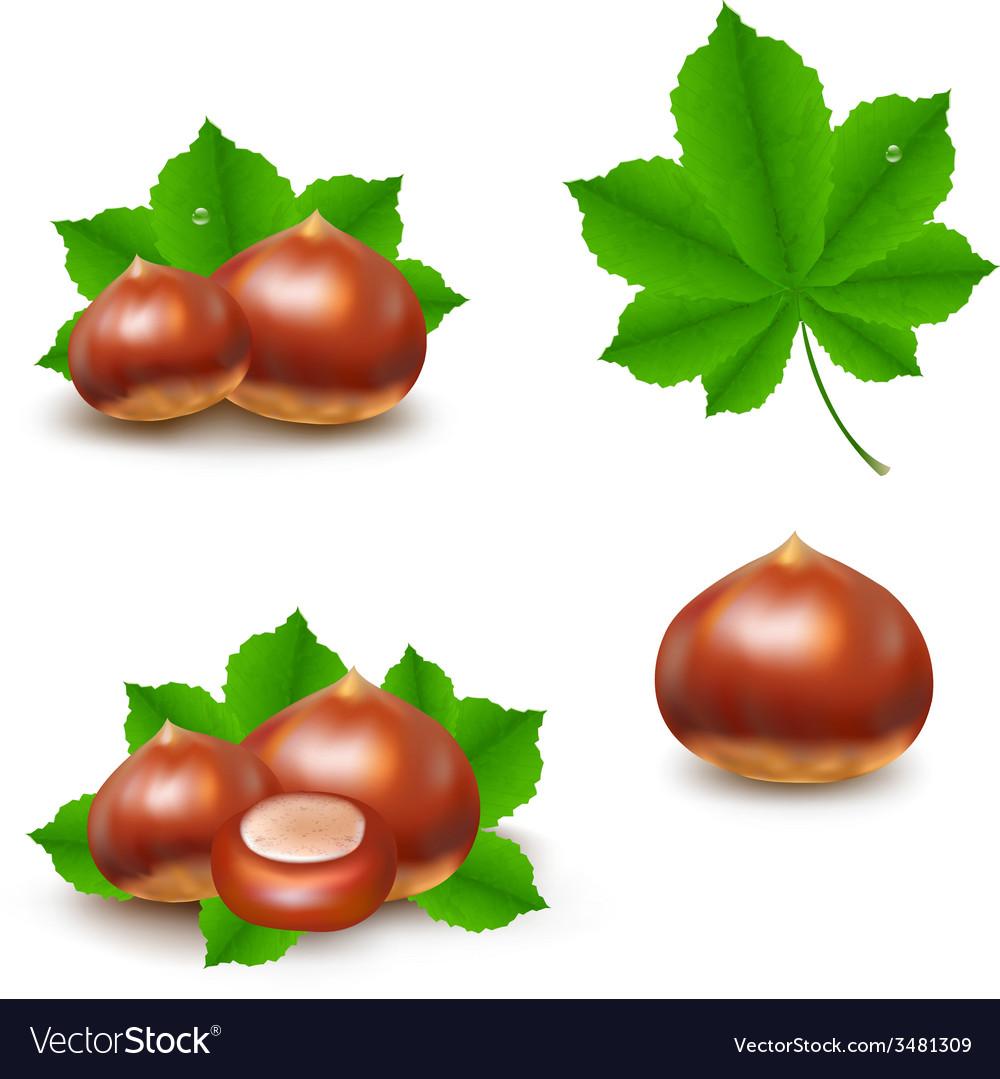 Chestnuts set vector   Price: 1 Credit (USD $1)