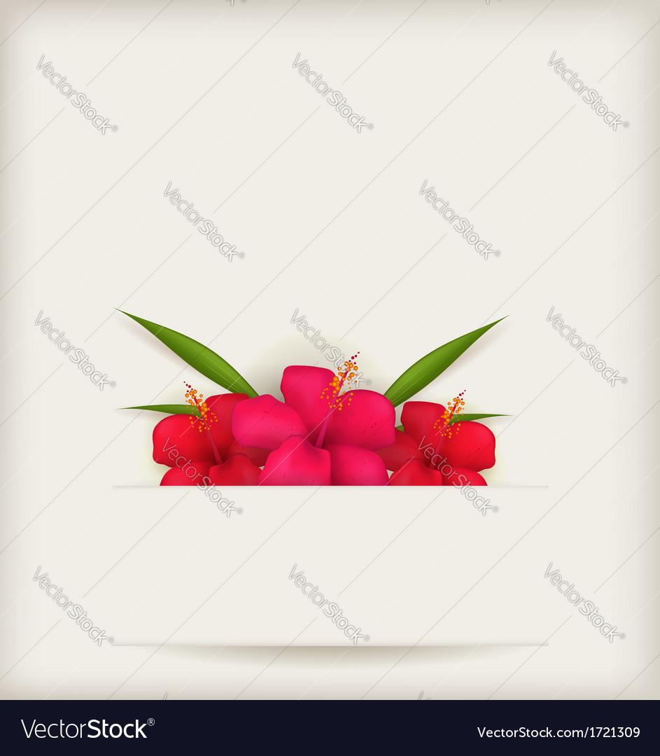 Hibiscus background vector   Price: 1 Credit (USD $1)