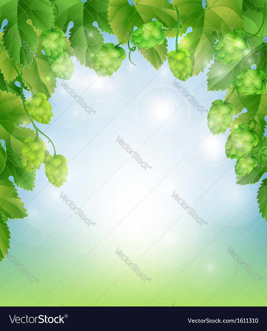 Background with hops vector | Price: 1 Credit (USD $1)