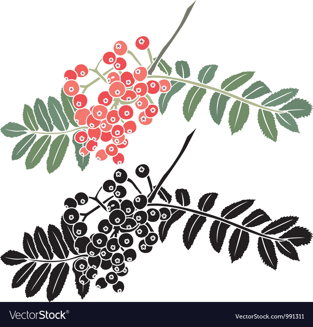Rowan berry branch stencil vector | Price: 1 Credit (USD $1)
