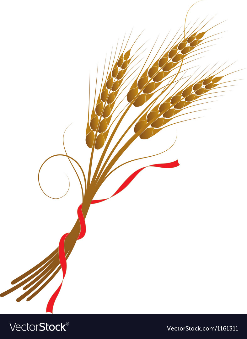 Spikelets of wheat vector | Price: 1 Credit (USD $1)